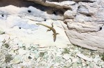 kamenni gubi